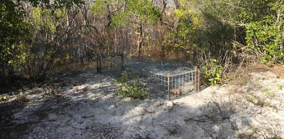Crocodilo do Nilo capturado nos pântanos de Afungi liberto com sucesso na Reserva do Niassa