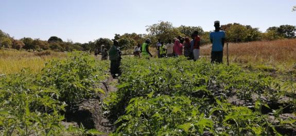 Livelihood restoration