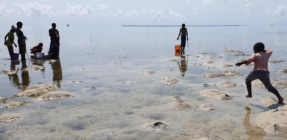 Inter-tidal collectors